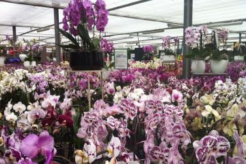 Orchideenausstellung_1280